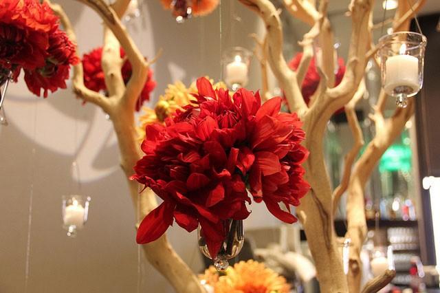 Dahlia-Tree,-more_9461145383_m