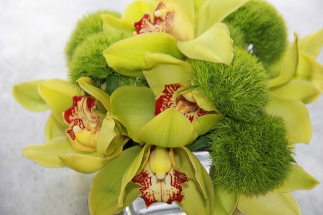 Green-Cymbidium-and-Hybrid-Dianthus,-cocktail-arrangement_9463930966_m