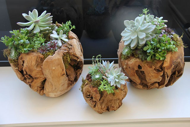 Nespresso,-succulent-plantings_9463953182_m