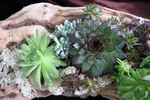 Succulent-Log-Planting_9460634559_m