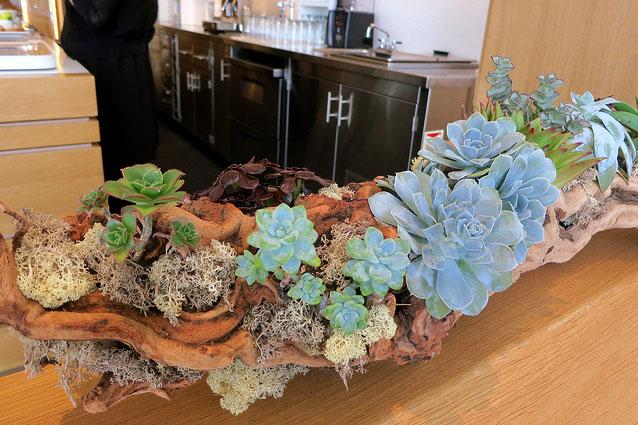 Succulent-Planting-Nespresso-Cafe_9461056019_m