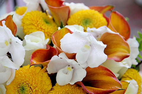 Unassuming-Gerbera-daisies,-Luxe-Ladyslippers-and-Calla-Lilies_9463947870_m